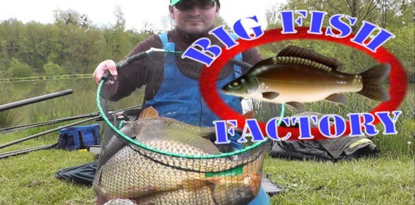 Pêche de la carpe au coup hors carpodrome – big fish factory