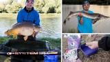 Articles à venir sur la pêche de la carpe au coup et des gros spécimens